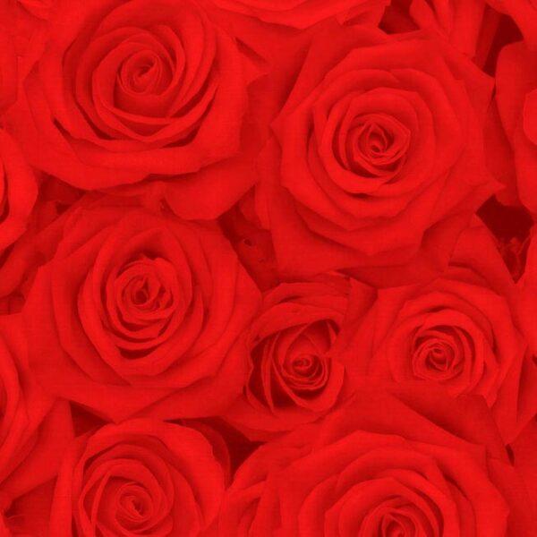 papel de regalo rojo con dibujos de rosas económico 091903